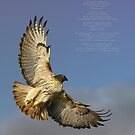 hawk ascending by michael christopher jansen