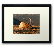 Bull Elk In Colorado Tundra Framed Print
