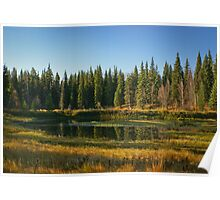 Forrest Reflections Poster