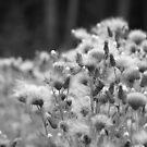 Pretty Fluff by Jena Ferguson