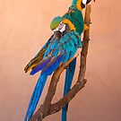 Parrots by pahit
