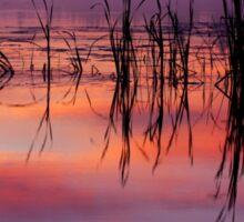 Sunrise Reflection Sticker