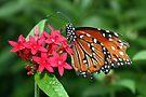 Frayed Butterfly by AuntDot
