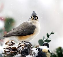 Titmouse in the Snow by Christina Rollo