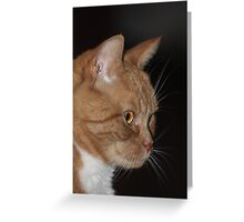 Cat Sillouette Greeting Card