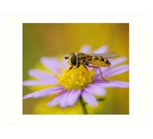 hoverfly perching purple,too Art Print