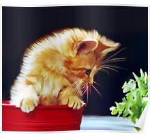 Cat On Red Tin Poster