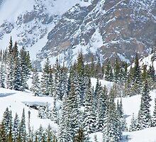 Winter Pines II by John  De Bord Photography