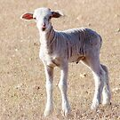 Lamb Like by Rick Playle