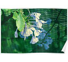 bleu indigo Poster