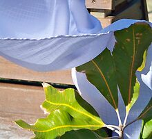 leaf and ribbon by trinitywilson