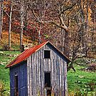 Old Shed by bettywiley