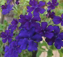 Purple a Plenty by Sarah Trent
