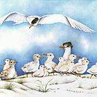 The Tern Family Gathering by Kate Eller