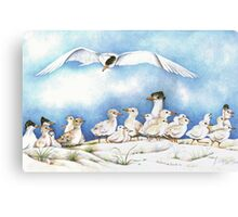 The Tern Family Gathering Canvas Print