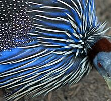 A Blue Bird Of A Different Sort by Bryony Griffiths