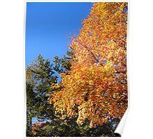 Brilliant Fall Colors Poster