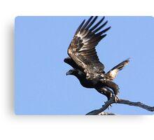 Eagles Away-2 Canvas Print