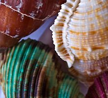 Shells by Andrew (ark photograhy art)