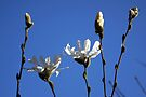 Spring is in the Air by Jo Nijenhuis