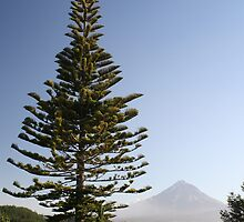Fir Tree by BrooksNZ