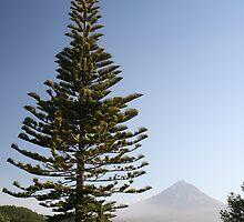 Fir Tree by BrooksNZ