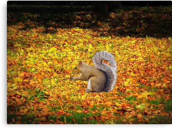 Squirrel In Autumn Leaves by Linda Miller Gesualdo