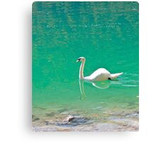 Swan on 'clear water of a lake (Italy) Canvas Print