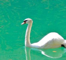 Swan on 'clear water of a lake (Italy) Sticker