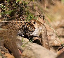 Gulp! Pseudonaja textilis dislocates its jaw by PurelyPrime