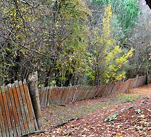 Hill End Fences by Bev Woodman