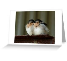 Swallow Chicks Greeting Card
