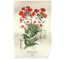 Favourite flowers of garden and greenhouse Edward Step 1896 1897 Volume 3 0098 Perennial Phlox Poster