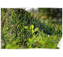 Green grass in September Poster
