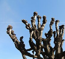 Sturdy tree toward the blue sky by alicara