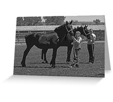 Percheron Beauties Greeting Card