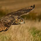 Kaln - Eagle Owl by Val Saxby