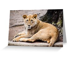 Pride of the Jungle Greeting Card