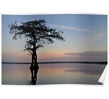 Cypress sunrise Poster