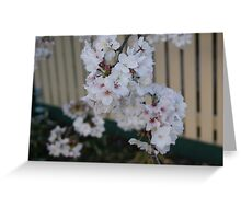 A cherry tree blossoming Greeting Card