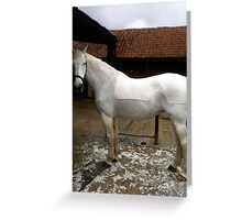 Willow's Winter coat Greeting Card