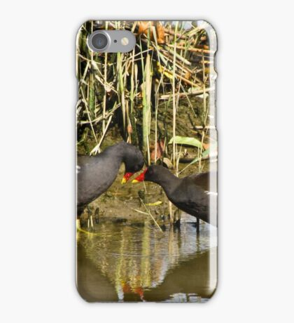 The sweetness and love of a pair of moorhens 2 iPhone Case/Skin