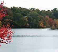 Changing Leaves in Rhode Island by prpltrtl8