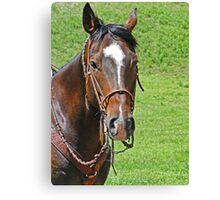 Equine Beauty Canvas Print