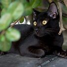 Street Cat Singapore - Soot by Anne Young