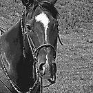 Classic Pony by Al Bourassa