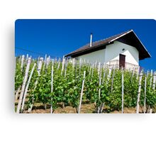 Vineyard slope in Slovenia Canvas Print