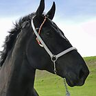 Classic Percheron by Al Bourassa