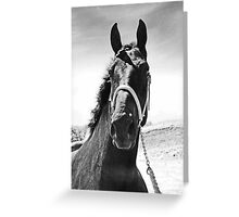 Percheron Posing Greeting Card