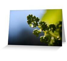 Baby Grapes Greeting Card